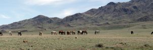 Pano with horses by voldemometr