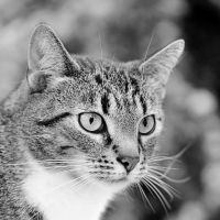 just a cat VII by Wilithin