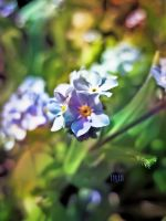 Forgetmenot by iriscup