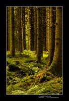 Kielder Forest 2 by newcastlemale