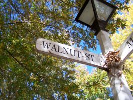 Walnut St by the-wandering-child