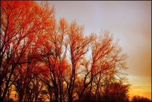 Trees on fire by 314dzi