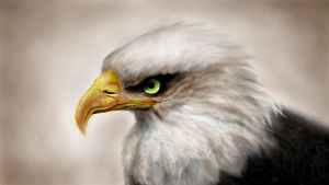 Eagle by Philipp-Steinhaus