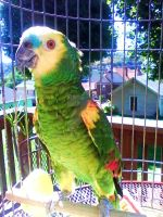 Popeye the Parrot by mediodia91