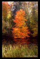 Fiery Fall Tree by Jenna-Rose