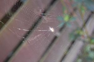 Spiderweb in the Sun by MewTangerine