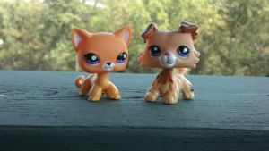 LPS yellow cat and Collie dog bbg by Vesperwolfy87