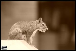 Squirrel with French Fry by LarryDNJR