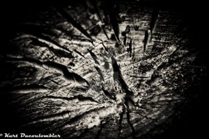 BW Wood by Riddseh