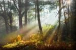 STOCK: Misty Forest light 2 by needanewname