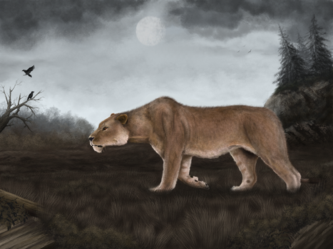Cave lion by Mihin89