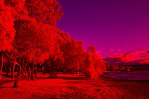 My Local Park Oversaturated by colinbm1