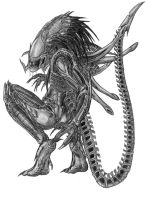 The PredAlien by Predaguy