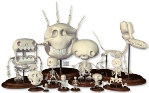 Skeleton collection by freeny