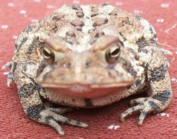 Toad 3 by Penny-Stock