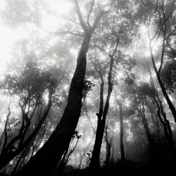 A forest by GillesMaselli