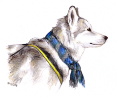 Diefenbaker from Due South by HorsepowerCreations