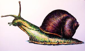Snail by Concini