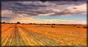 Harvest by zoomzoom
