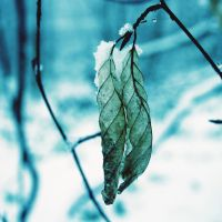 winter leaves by RickHaigh