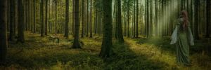 The Forest.. by AledJonesStockNArt