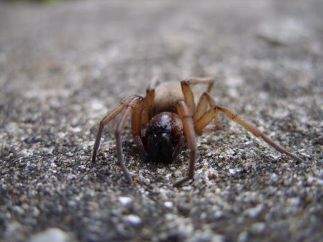 Ground Spider, grounded by Jakkar