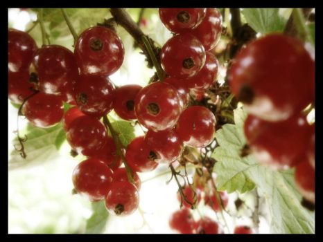 Currants by Narcisea