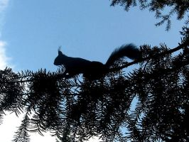Squirrel Silhouette by Oshunx