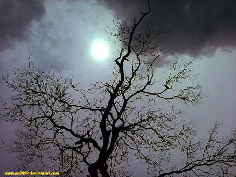 Tree against Sunlight Clouds by Subh99