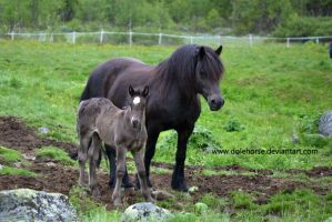 mare and foal by Dolehorse