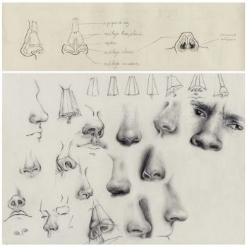 Noses study by crayon2papier