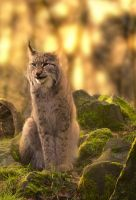 Luchs by Point-Blank-Silence