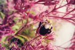 Abeille 2 by EveVictus