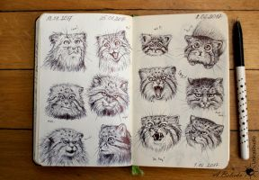 Pallas cat - mimicry sketches by UnicatStudio