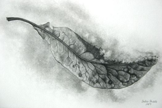 Leaf in snow by little-faerie-bits