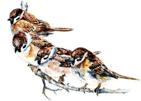 Sparrows by AnnaShell