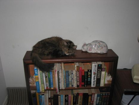 Bookends by 2katz