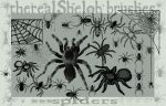 therealShelobbrushes:Spiders I by therealShelob