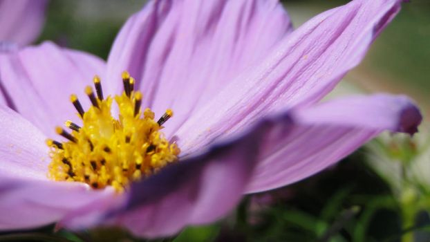 Close up of flower 2 by CRV2857826
