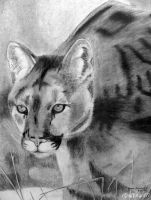 Charcoal Cougar by Gryffingirl77