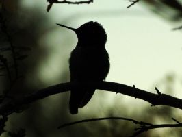 Silhouette by DaisyDinkle