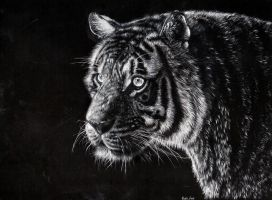 Tiger by CallieFink