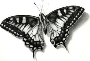 Mariposa by Efra270