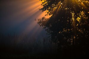 morning glory by mescamesh