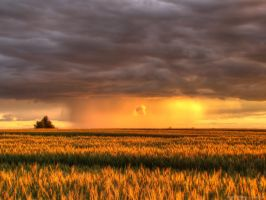 The Catcher in the Wheat by Zerseu