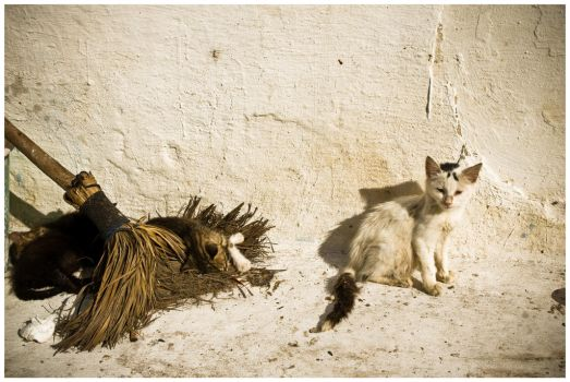 Kittens Waiting For A Witch by SantiBilly