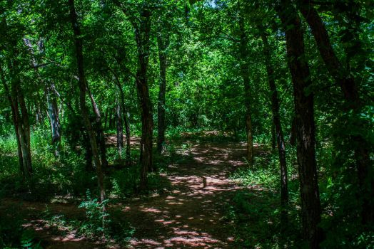 Tree Lined Path by SilverAce88