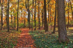 When Autumn Fills The Air by JustinDeRosa