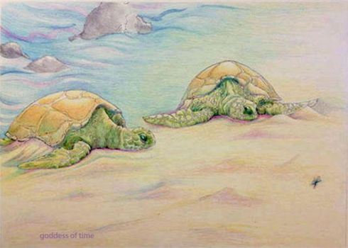 Sea Turtles by Goddess-of-Time