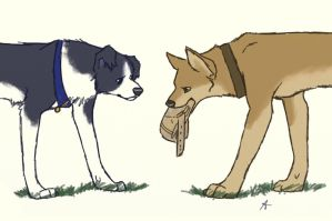 SPN dogs-Kept this for you by Sammaella